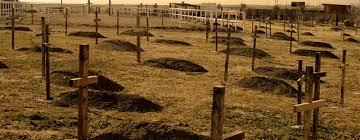 el cementerio de las animas 6